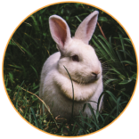 servicii-iepuri-groomer-salon.png