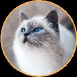 servicii-pisici-groomer.png